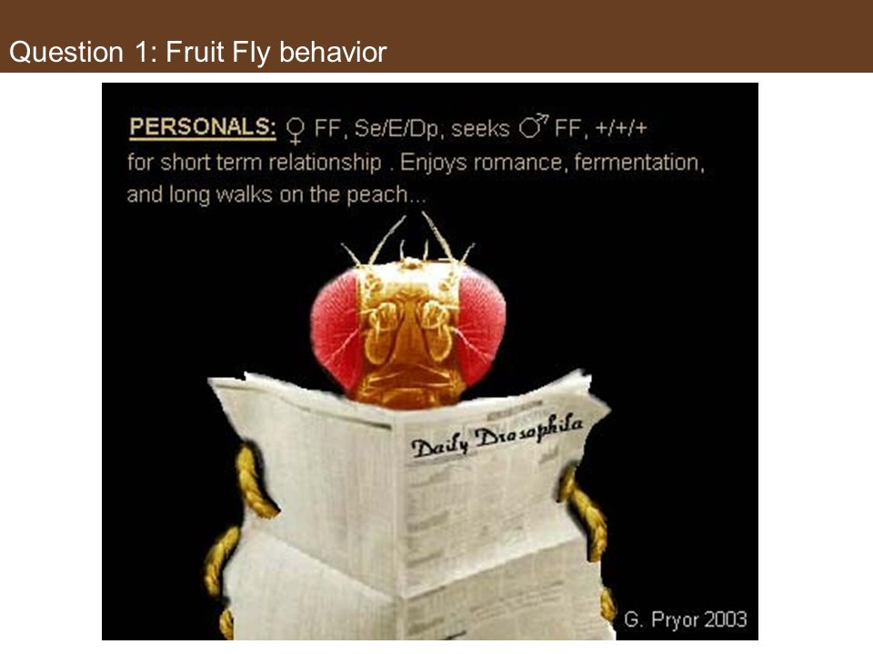 Question 1: Fruit Fly behavior But wait…Theres more about the fruit fly! Part (d) requires you to perform a Chi- Square test, but you likely do not kn