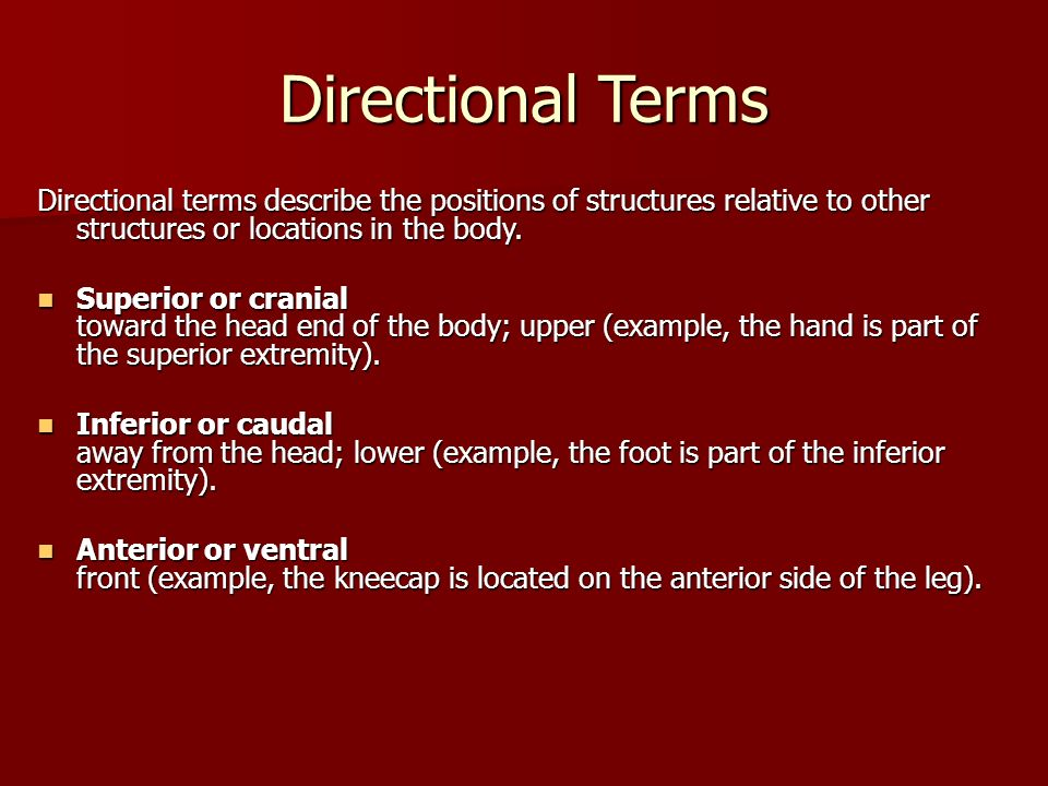 Directional Terms Directional terms describe the positions of structures relative to other structures or locations in the body. Superior or cranial to