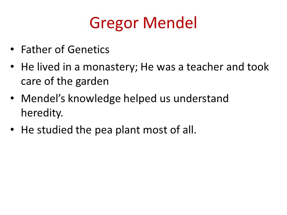 Gregor Mendel Father of Genetics He lived in a monastery; He was a teacher and took care of the garden Mendels knowledge helped us understand heredity