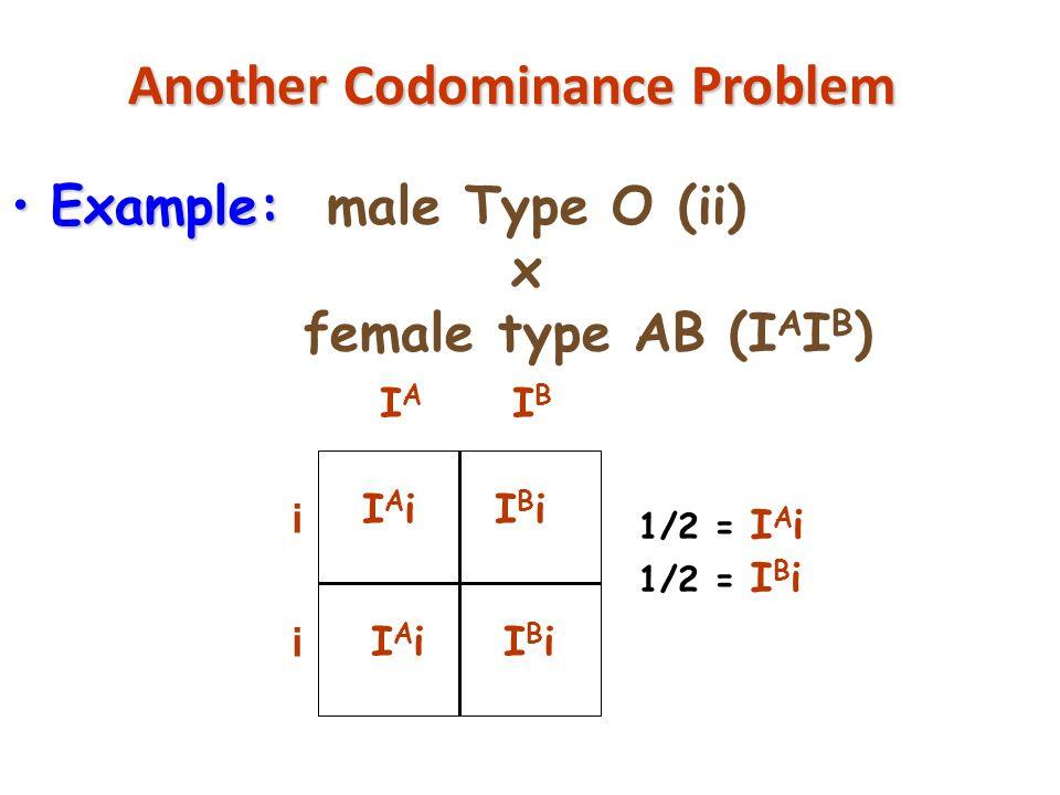 Another Codominance Problem copyright cmassengale31 Example:Example: male Type O (ii) x female type AB (I A I B ) IAiIAiIBiIBi IAiIAiIBiIBi 1/2 = I A