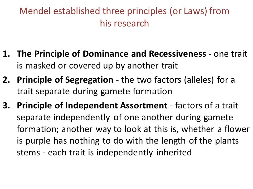 Mendel established three principles (or Laws) from his research 1.The Principle of Dominance and Recessiveness - one trait is masked or covered up by
