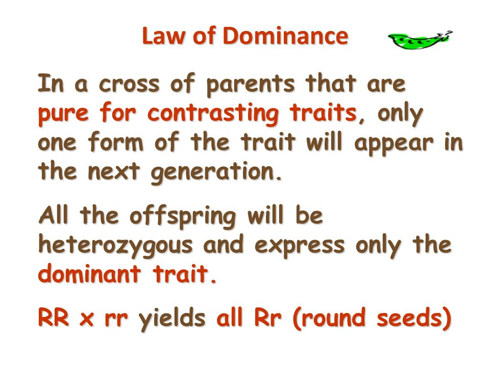 More Terminology Genotype - gene combination for a trait (e.g.