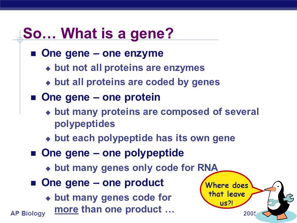 AP Biology 2005-2006 So… What is a gene.