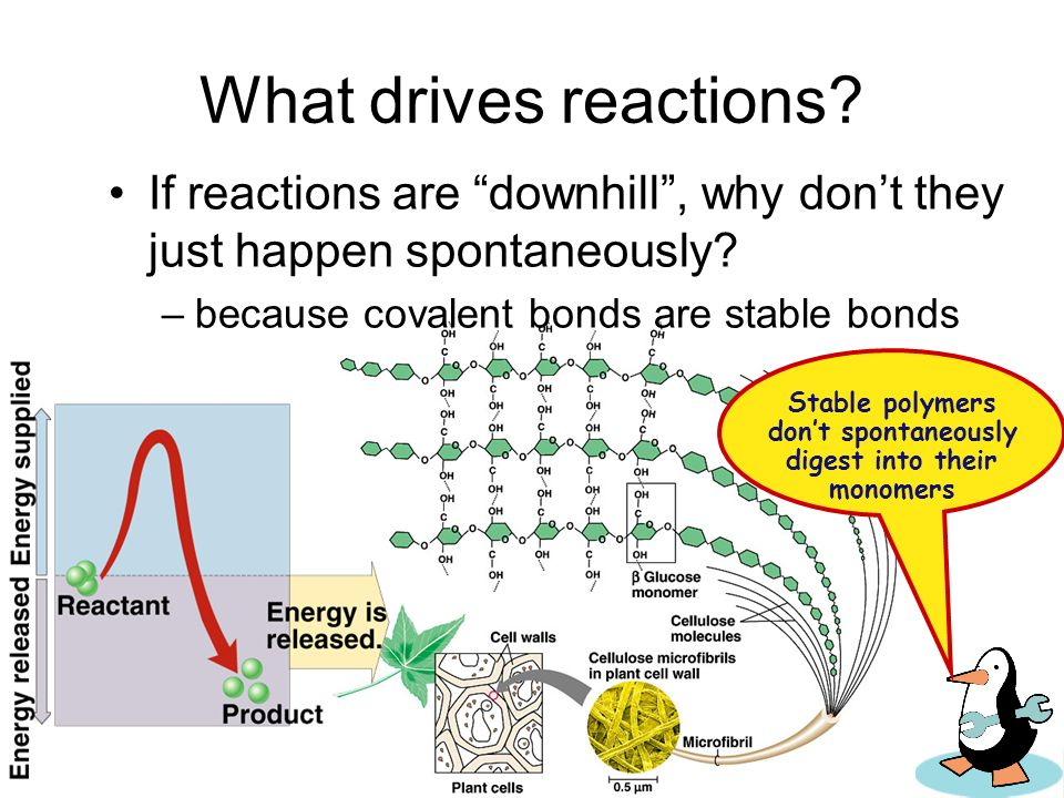Energy & life Organisms require energy to live –where does that energy come from? coupling exergonic reactions (releasing energy) with endergonic reac