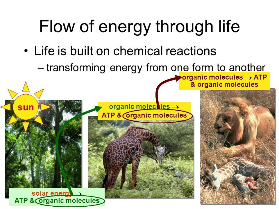 From food webs to the life of a cell energy