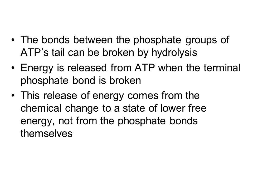 LE 8-8 Phosphate groups Ribose Adenine