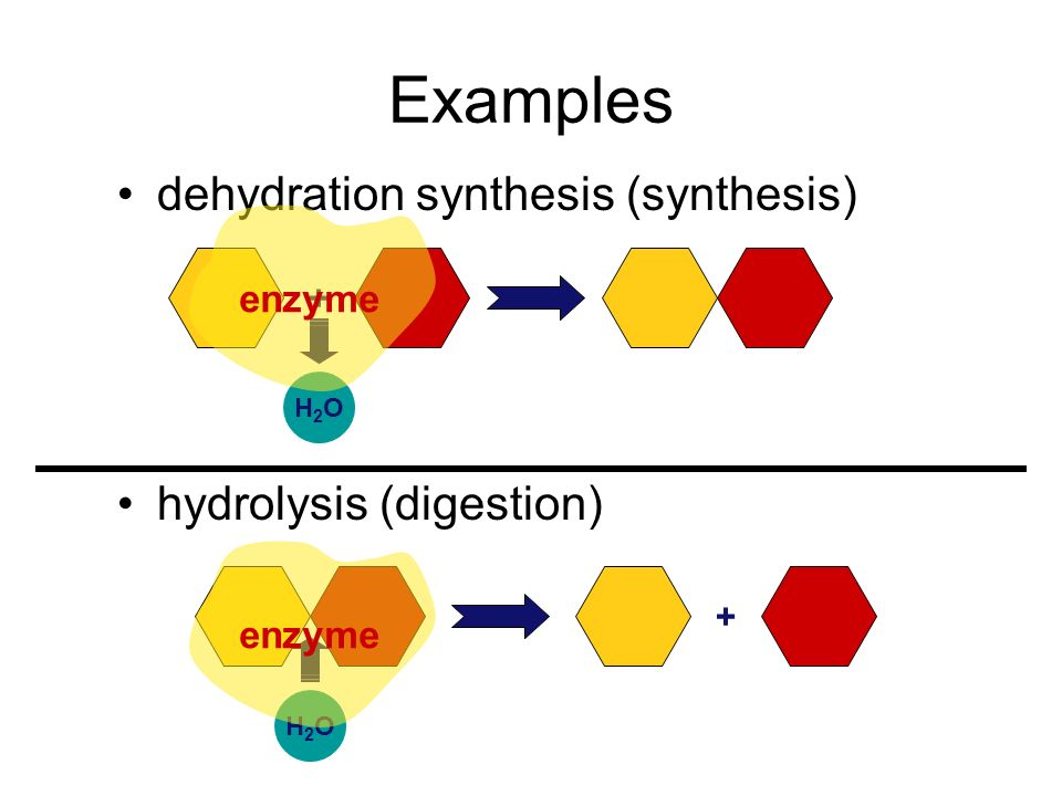 Metabolism Chemical reactions of life –forming bonds between molecules dehydration synthesis synthesis anabolic reactions –breaking bonds between mole