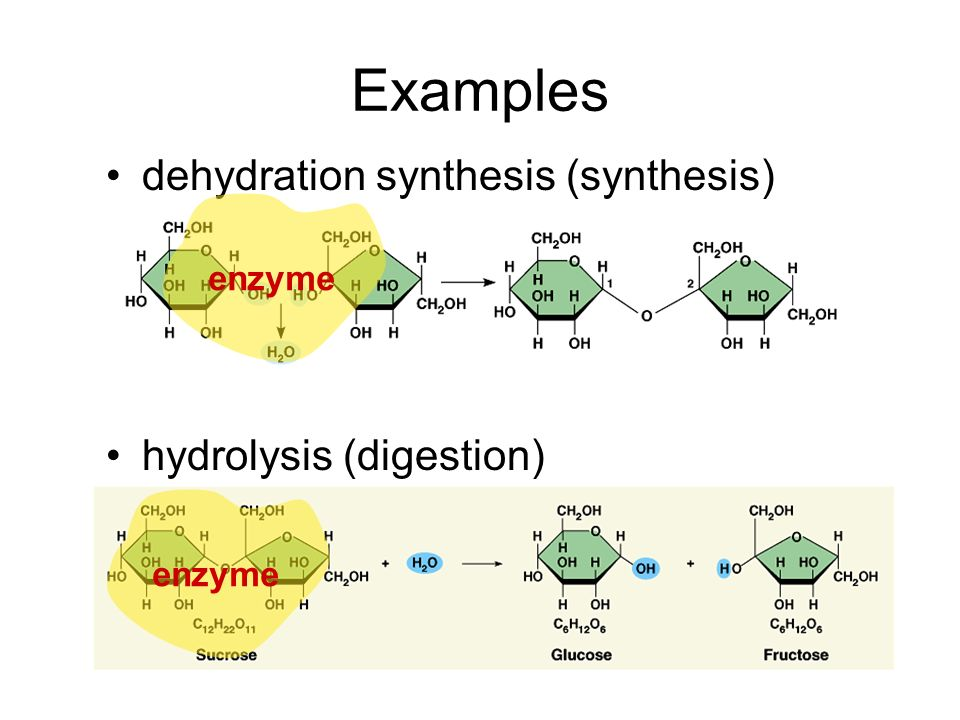 Examples dehydration synthesis (synthesis) hydrolysis (digestion) + H2OH2O + H2OH2O enzyme
