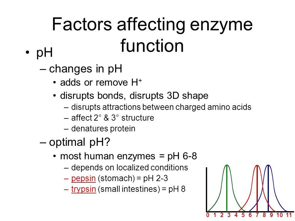 7 pH reaction rate 20134568910 pepsintrypsin Whats happening here?! 11121314 pepsin trypsin