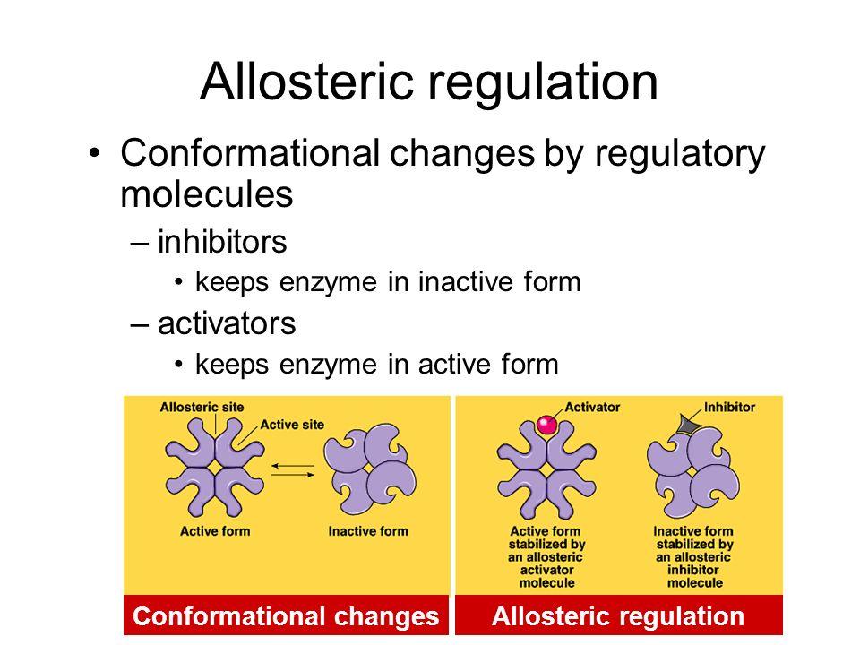 Irreversible inhibition Inhibitor permanently binds to enzyme –competitor permanently binds to active site –allosteric permanently binds to allosteric