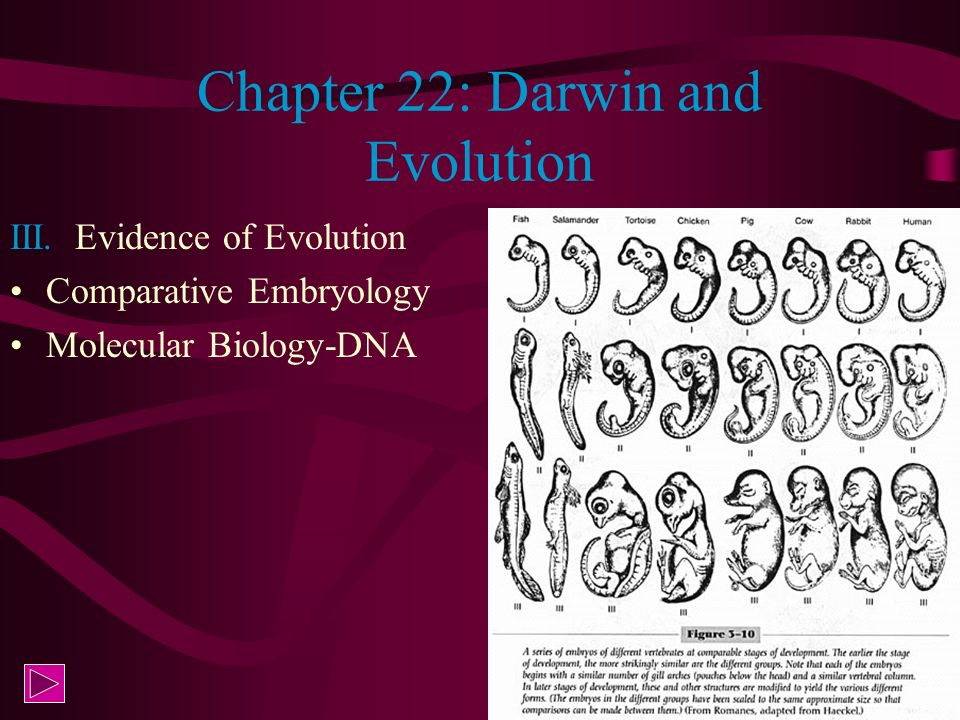 Chapter 22: Darwin and Evolution III. Evidence of Evolution Comparative Embryology Molecular Biology-DNA