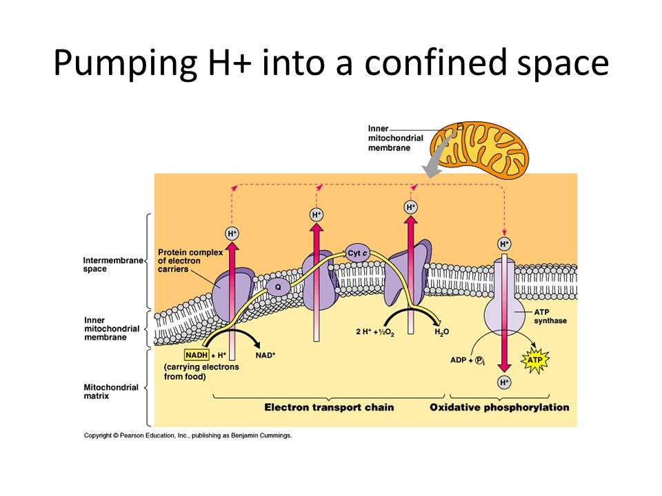 Pumping H+ into a confined space