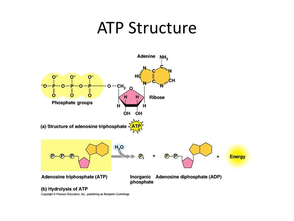 Phosphorylation using Free energy