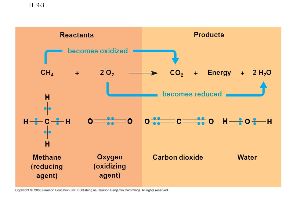 LE 9-3 Reactants becomes oxidized becomes reduced Products H Methane (reducing agent) Oxygen (oxidizing agent) Carbon dioxideWater HC H H OO O OCO H H