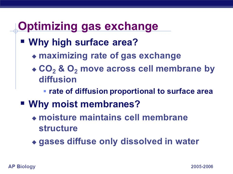AP Biology 2005-2006 Gas exchange in many forms… one-celledamphibiansechinoderms insectsfishmammals endotherm vs.
