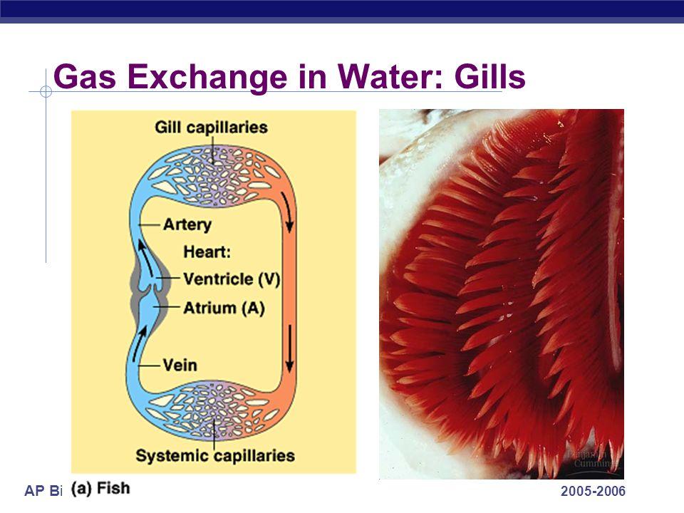 AP Biology 2005-2006 Gas Exchange in Water: Gills