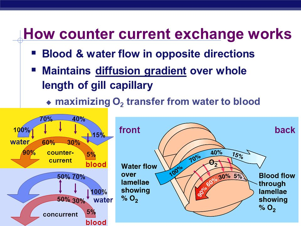 AP Biology 2005-2006 Gas Exchange on Land Advantages of terrestrial life air has many advantages over water higher concentration of O 2 O 2 & CO 2 diffuse much faster through air respiratory surfaces exposed to air do not have to be ventilated as thoroughly as gills air is much lighter than water & therefore much easier to pump expend less energy moving air in & out Disadvantages keeping large respiratory surface moist causes high water loss Why dont land animals use gills?