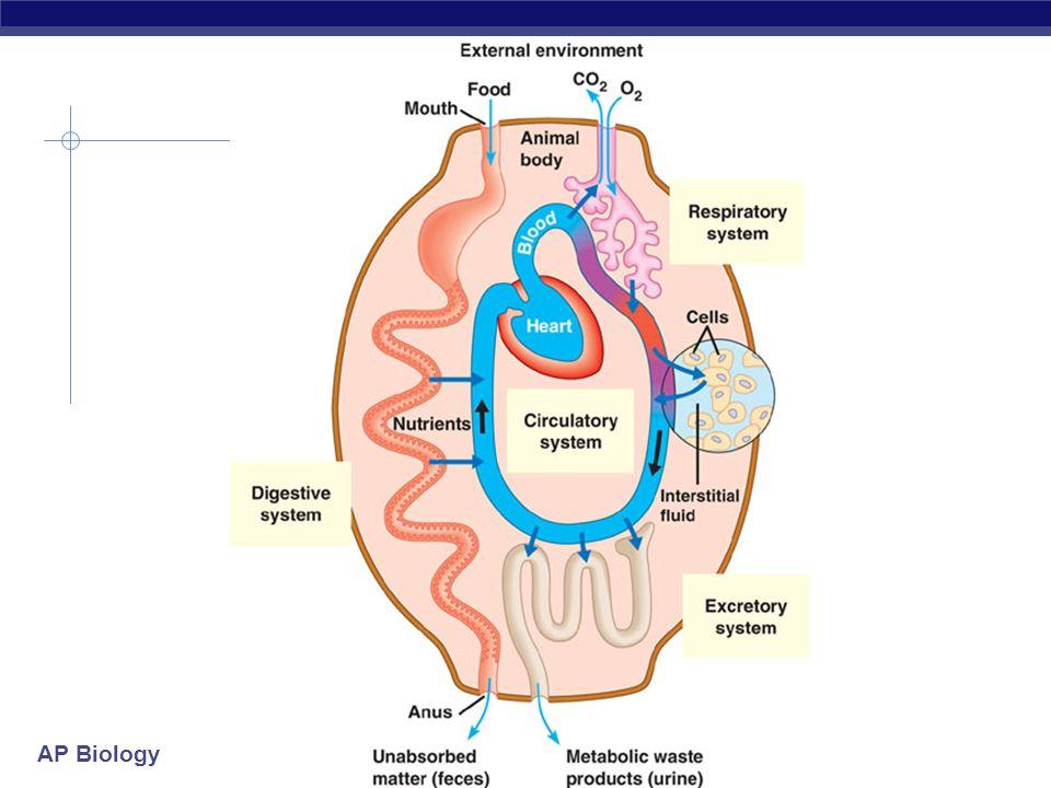 AP Biology 2008-2009 gills alveoli elephant seals Gas Exchange Respiratory Systems
