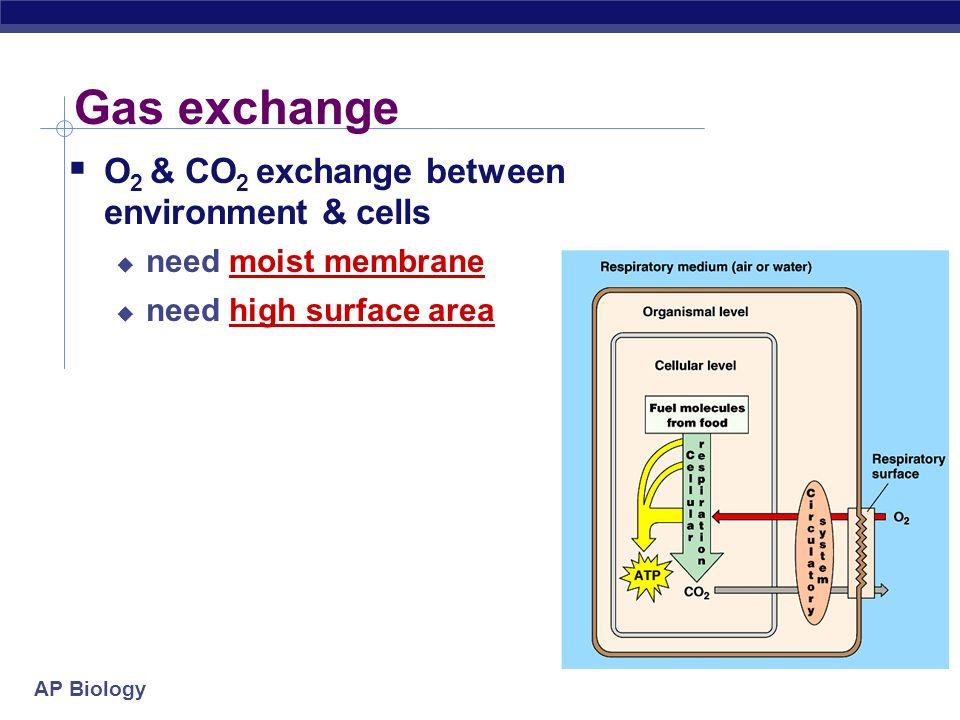 Why do we need a respiratory system? O2O2 food ATP CO 2 respiration for respiration Need O 2 in for aerobic cellular respiration make ATP Need CO 2 ou