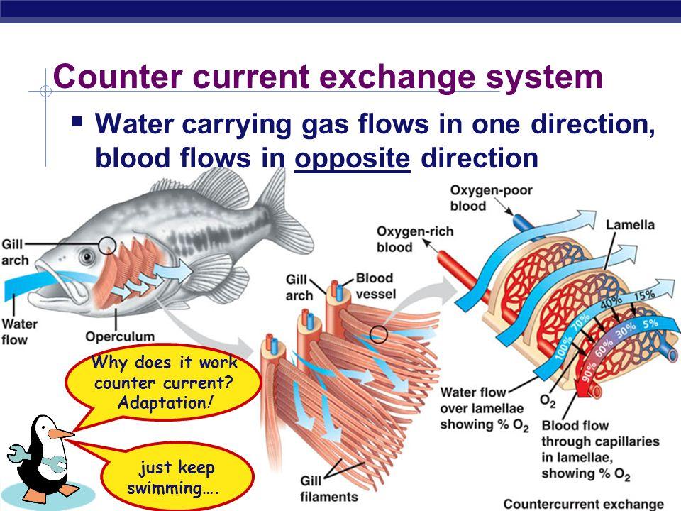 AP Biology Gas Exchange in Water: Gills