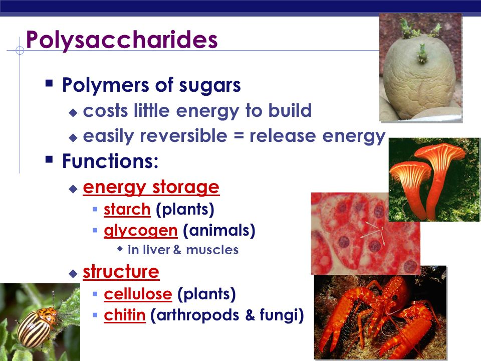Building sugars Dehydration synthesis   fructose   glucose monosaccharides   sucrose (table sugar) disaccharide H2OH2O