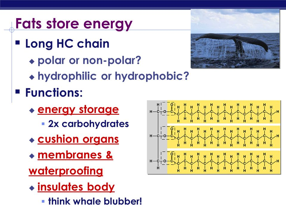 Discussion What kind of molecule would you expect to be hydrophobic - polar or non-polar? Why? Do you think lipids (such as fats, oils, waxes) are pro