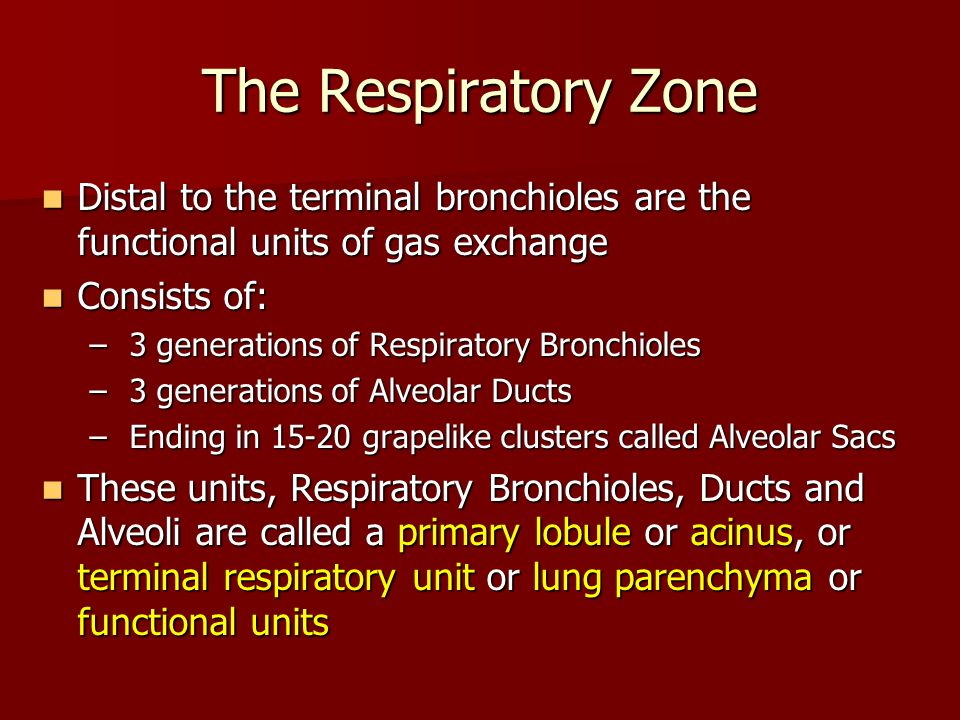 The Respiratory Zone Distal to the terminal bronchioles are the functional units of gas exchange Distal to the terminal bronchioles are the functional