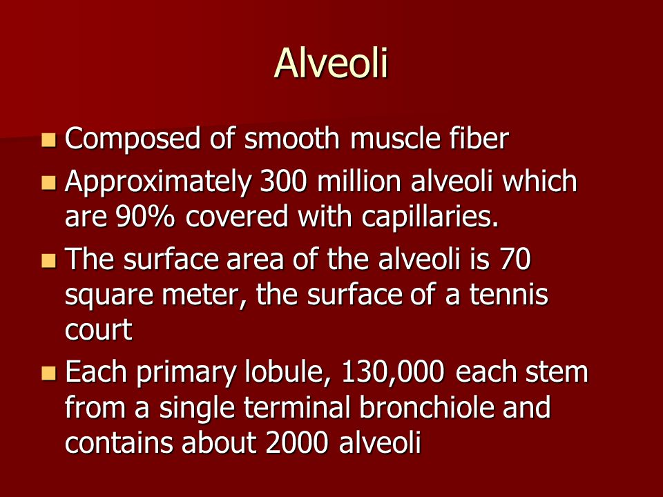 Alveoli Composed of smooth muscle fiber Composed of smooth muscle fiber Approximately 300 million alveoli which are 90% covered with capillaries. Appr