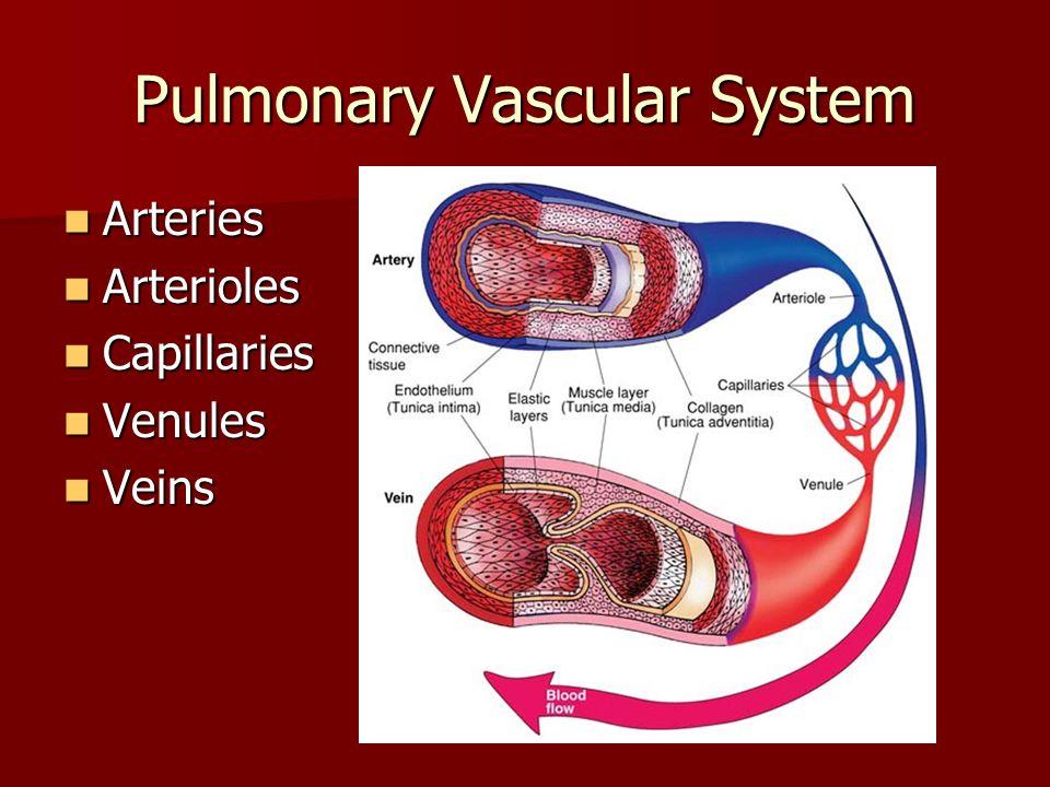 Pulmonary Vascular System Arteries Arteries Arterioles Arterioles Capillaries Capillaries Venules Venules Veins Veins