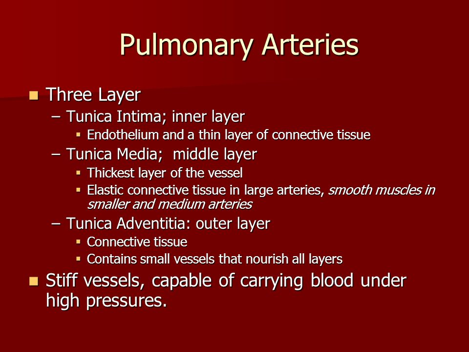 Pulmonary Arteries Pulmonary Arteries Three Layer Three Layer –Tunica Intima; inner layer Endothelium and a thin layer of connective tissue Endotheliu