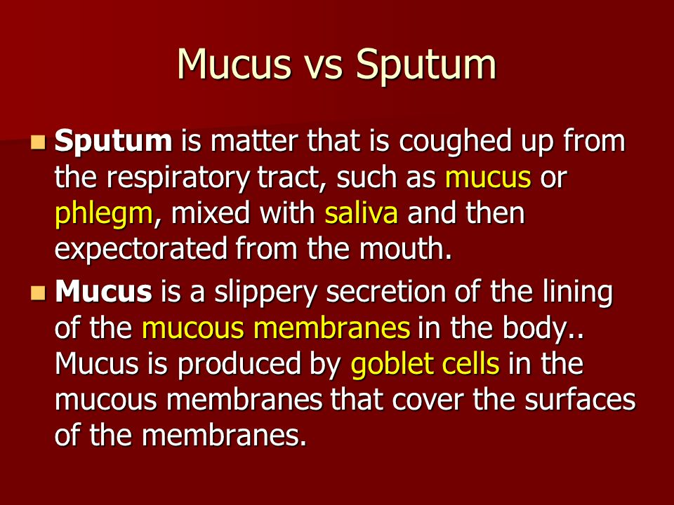 Mucus vs Sputum Sputum is matter that is coughed up from the respiratory tract, such as mucus or phlegm, mixed with saliva and then expectorated from