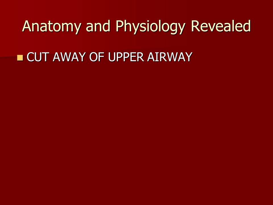 Anatomy and Physiology Revealed CUT AWAY OF UPPER AIRWAY CUT AWAY OF UPPER AIRWAY