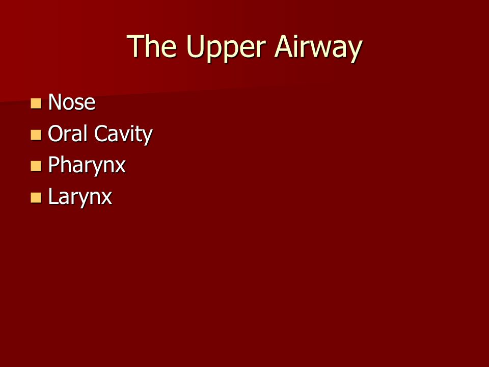 The Upper Airway Nose Nose Oral Cavity Oral Cavity Pharynx Pharynx Larynx Larynx