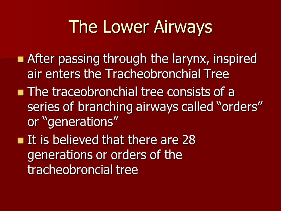 The Lower Airways After passing through the larynx, inspired air enters the Tracheobronchial Tree After passing through the larynx, inspired air enter