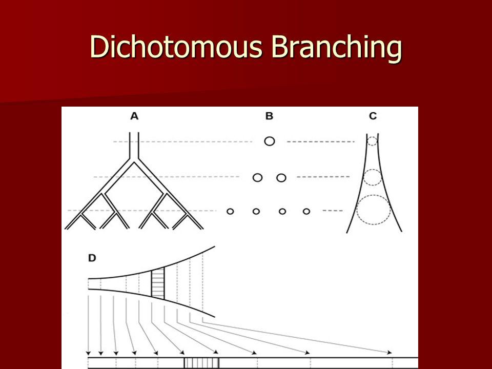 Dichotomous Branching