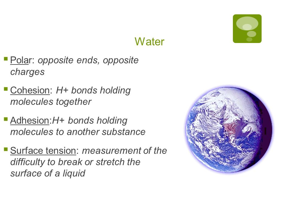 Water Polar: opposite ends, opposite charges Cohesion: H+ bonds holding molecules together Adhesion:H+ bonds holding molecules to another substance Surface tension: measurement of the difficulty to break or stretch the surface of a liquid