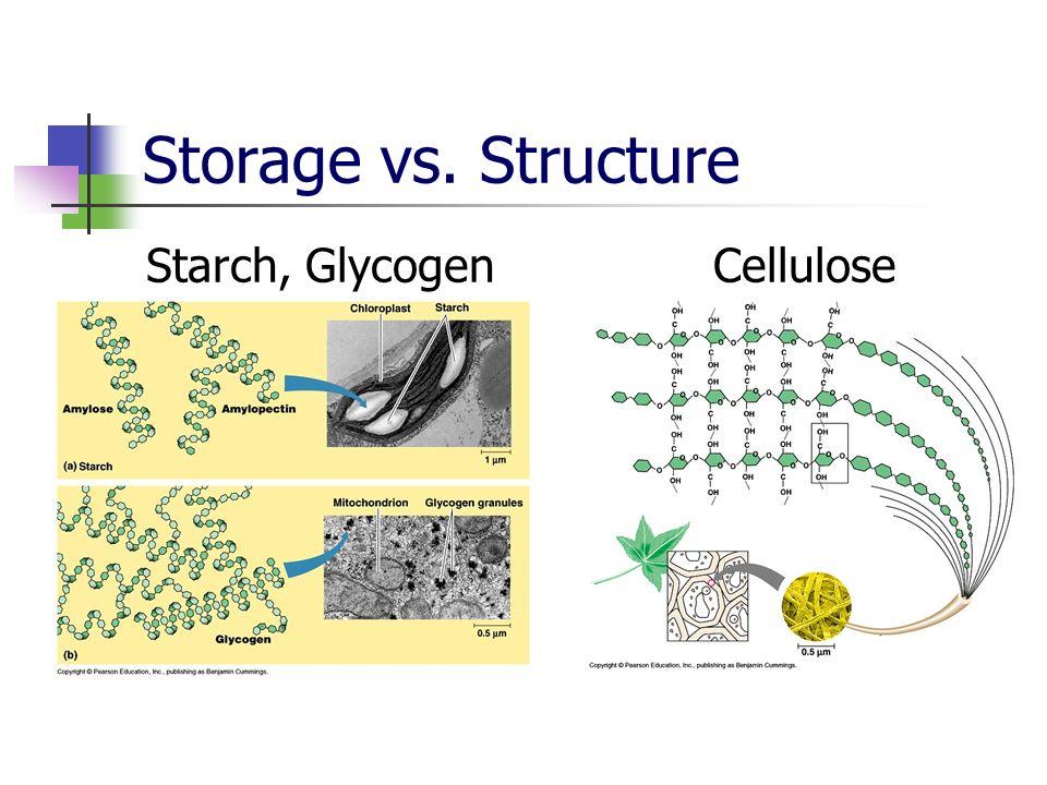Storage vs. Structure Starch, Glycogen Cellulose