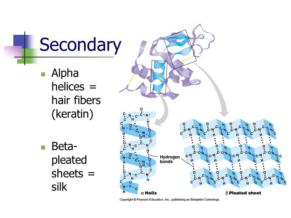 Alpha helices = hair fibers (keratin) Beta- pleated sheets = silk Secondary