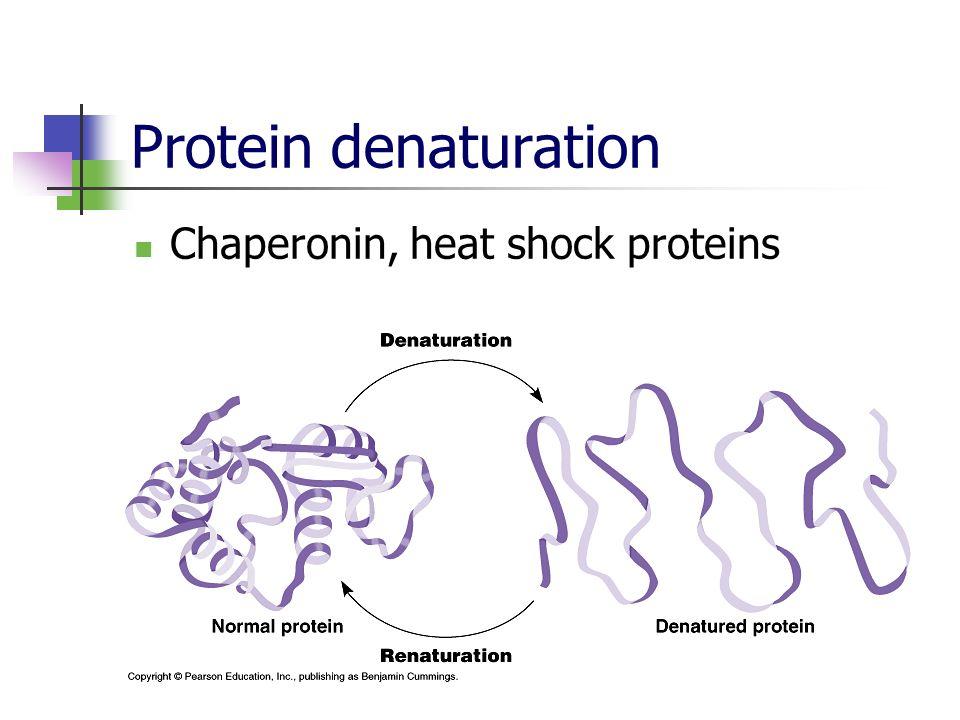Protein denaturation Chaperonin, heat shock proteins