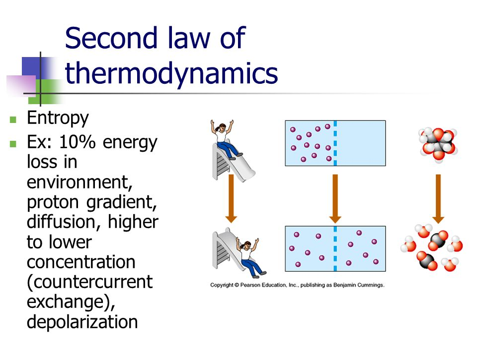 Second law of thermodynamics Entropy Ex: 10% energy loss in environment, proton gradient, diffusion, higher to lower concentration (countercurrent exchange), depolarization