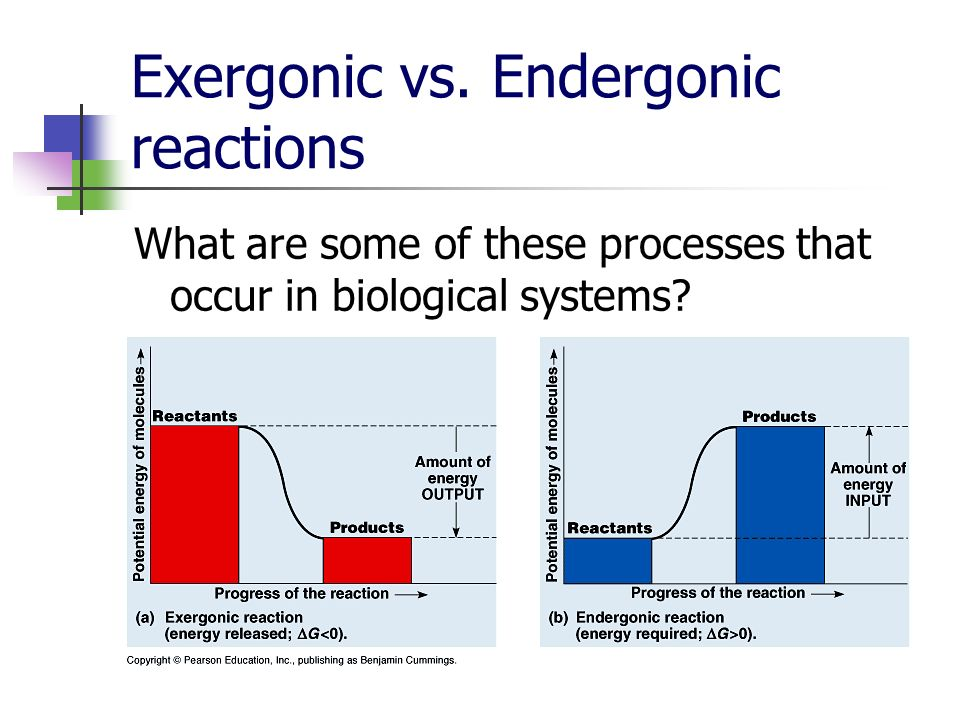 Exergonic vs. Endergonic reactions What are some of these processes that occur in biological systems?