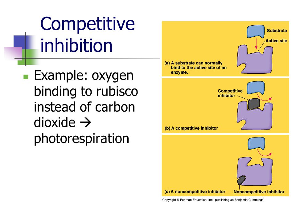 Competitive inhibition Example: oxygen binding to rubisco instead of carbon dioxide photorespiration