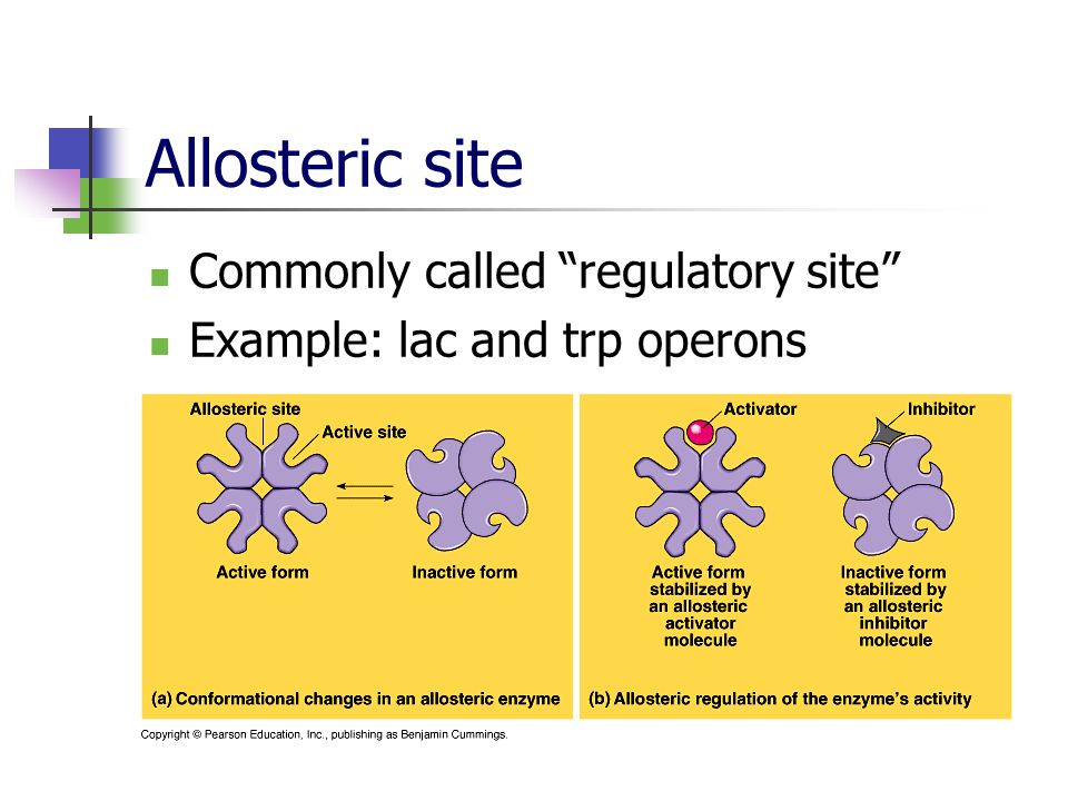 Allosteric site Commonly called regulatory site Example: lac and trp operons