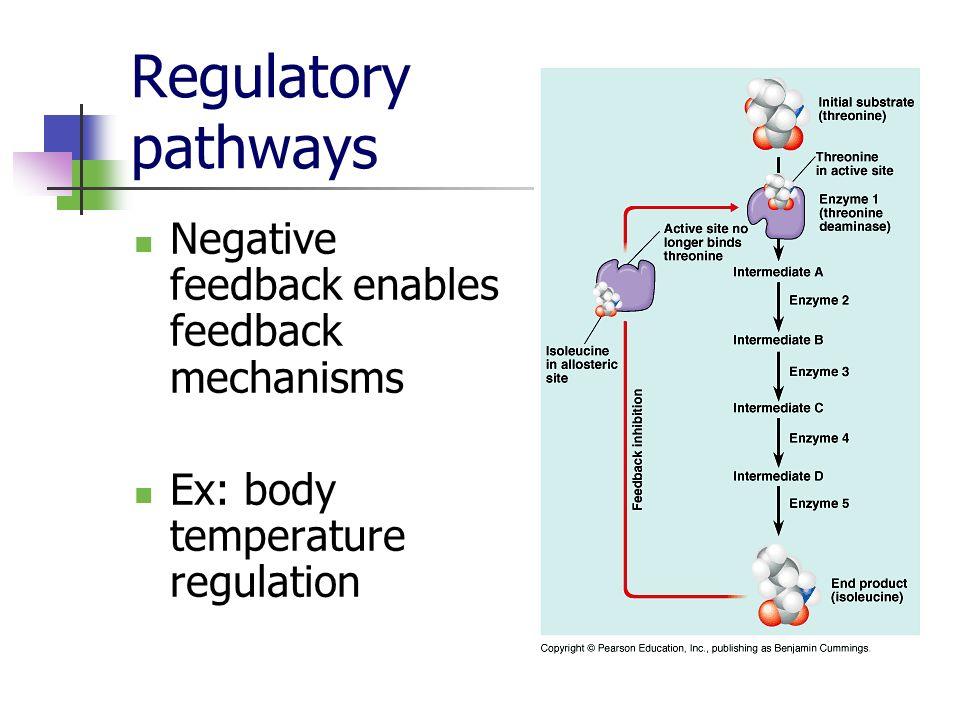 Regulatory pathways Negative feedback enables feedback mechanisms Ex: body temperature regulation