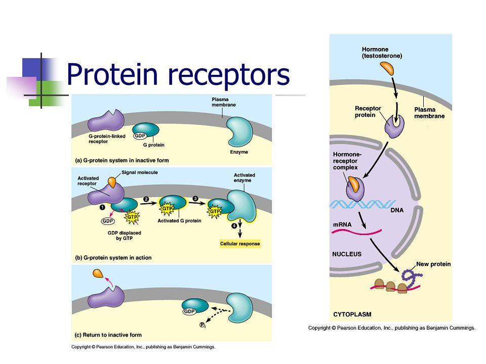 Protein receptors