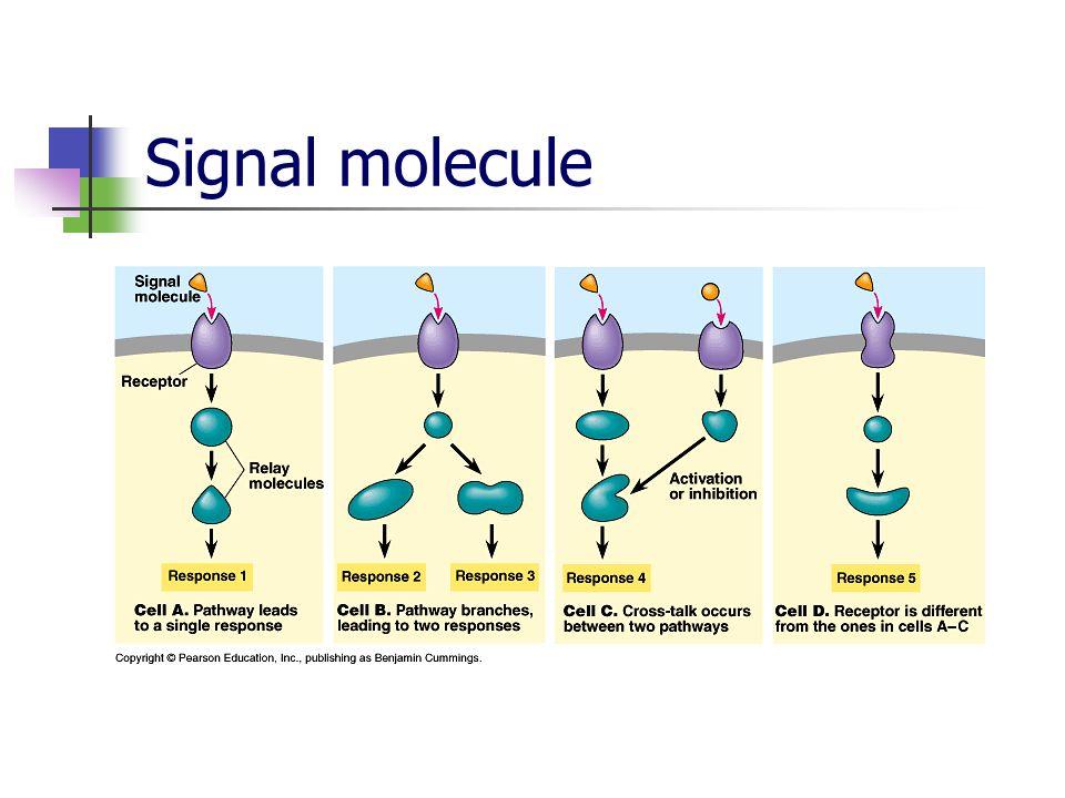 Signal molecule