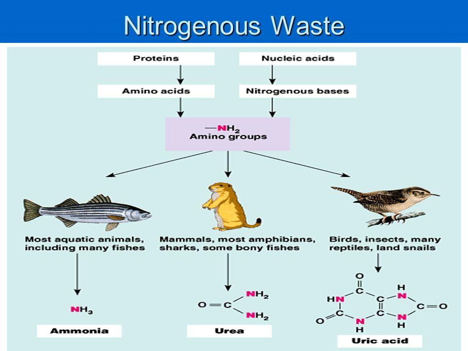 Nitrogenous Waste