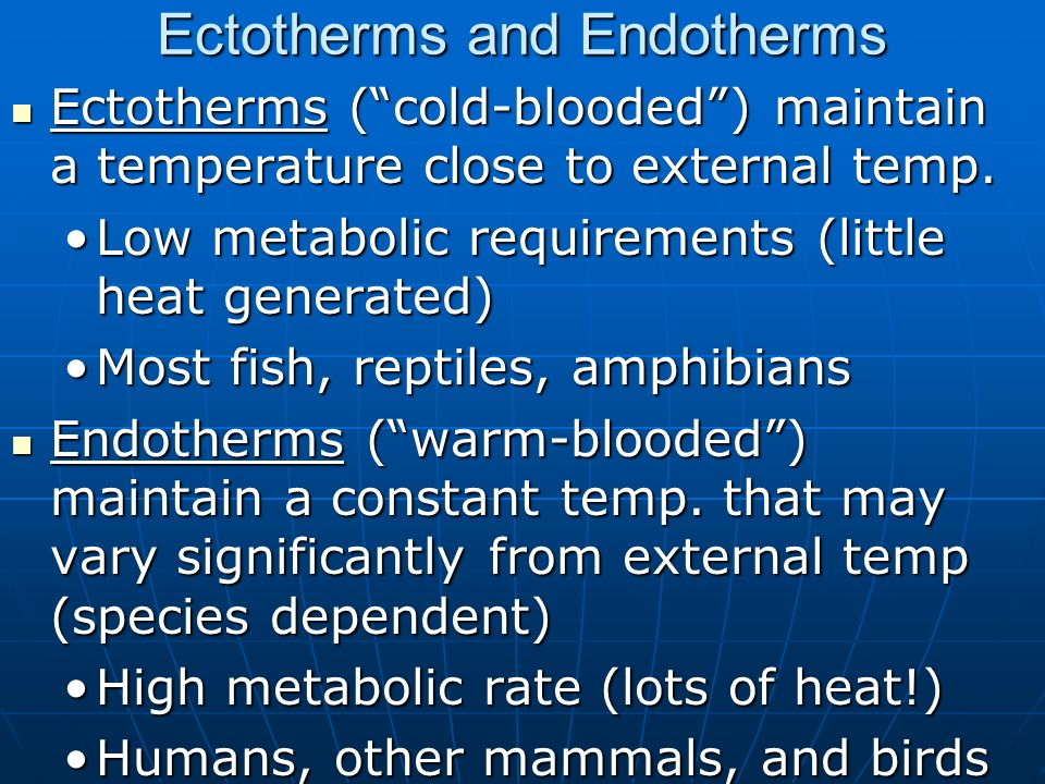 Ectotherms and Endotherms Ectotherms (cold-blooded) maintain a temperature close to external temp. Ectotherms (cold-blooded) maintain a temperature cl
