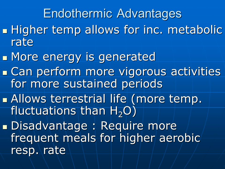 Endothermic Advantages Higher temp allows for inc. metabolic rate Higher temp allows for inc. metabolic rate More energy is generated More energy is g