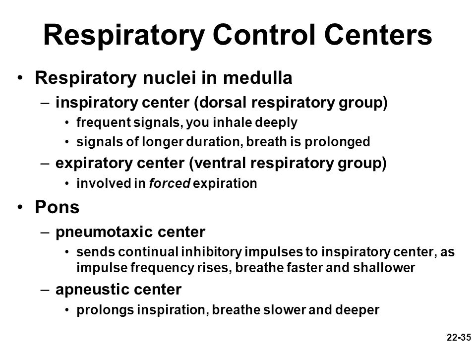 22-35 Respiratory Control Centers Respiratory nuclei in medulla –inspiratory center (dorsal respiratory group) frequent signals, you inhale deeply sig